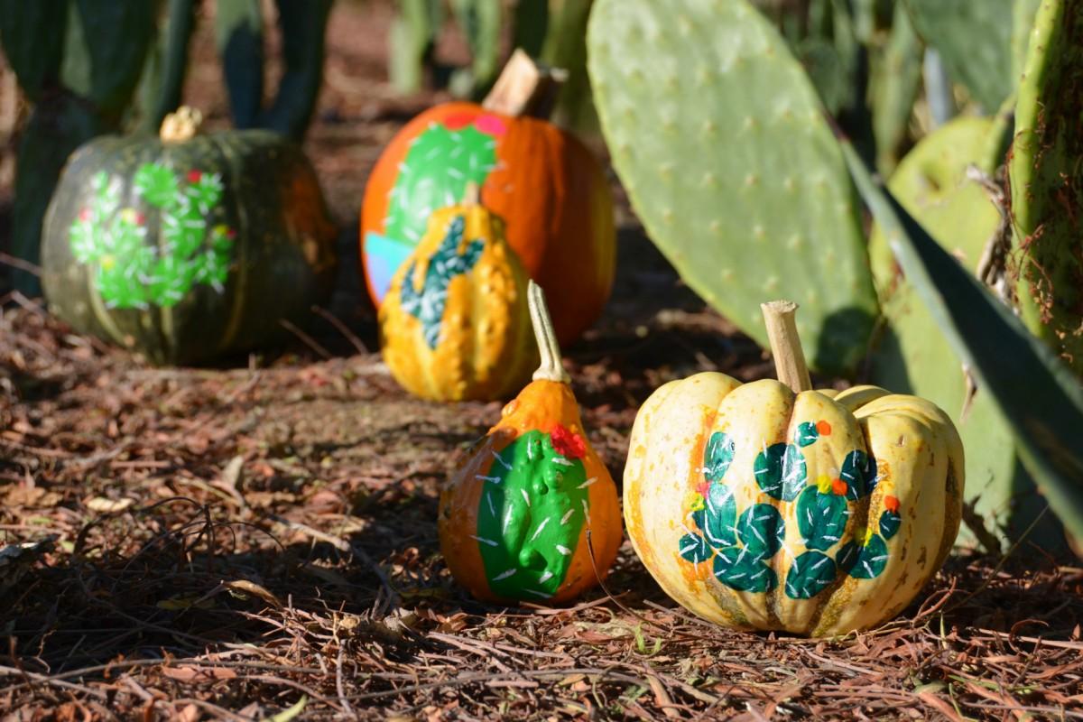 a-painted-gourd-garden