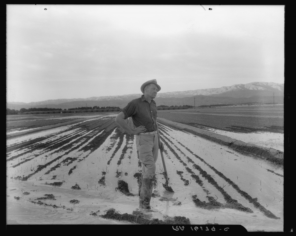 Dorothea Lange (U.S.A., 1895–1965), Field Worker Irrigating Alfalfa and Barley Fields, 1937. Photograph. Courtesy of The Bancroft Library, University of California, Berkeley