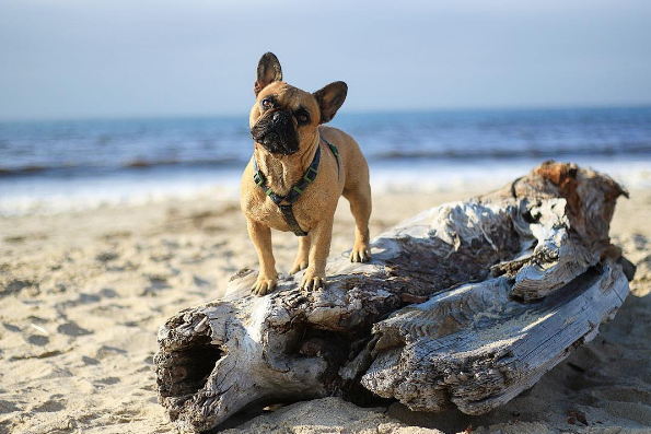 paws-in-the-sand