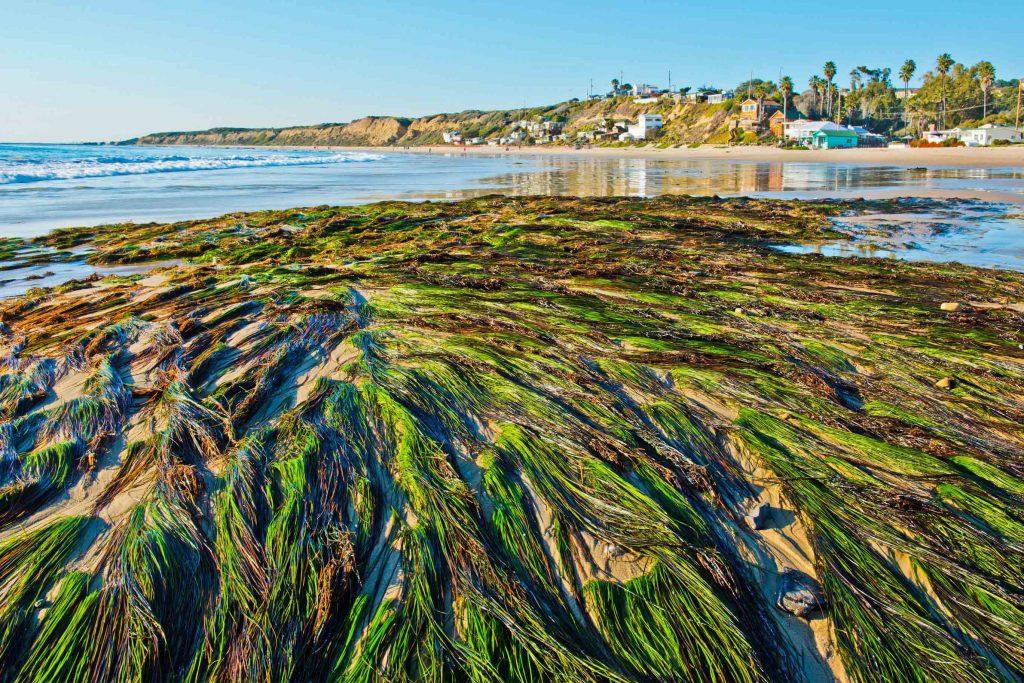 sea-grass-historic-district
