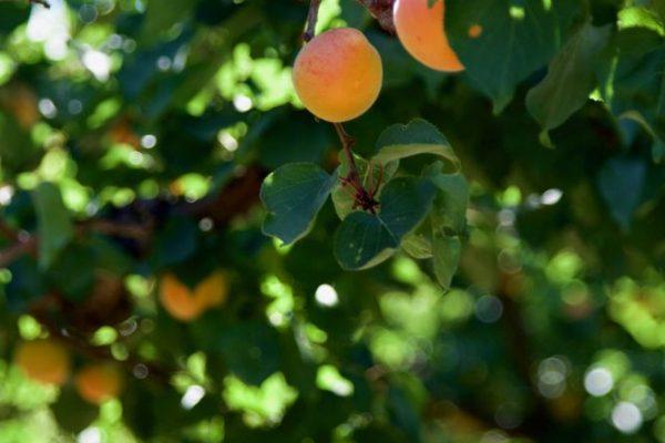 trees-silicone-valley-andys-farm-san-jose-california