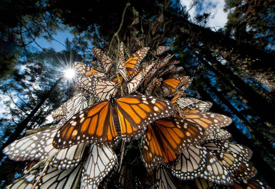 monarch-butterflies-welcome-home-party